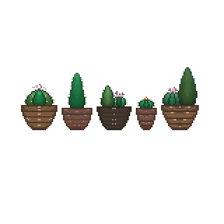 My Cacti