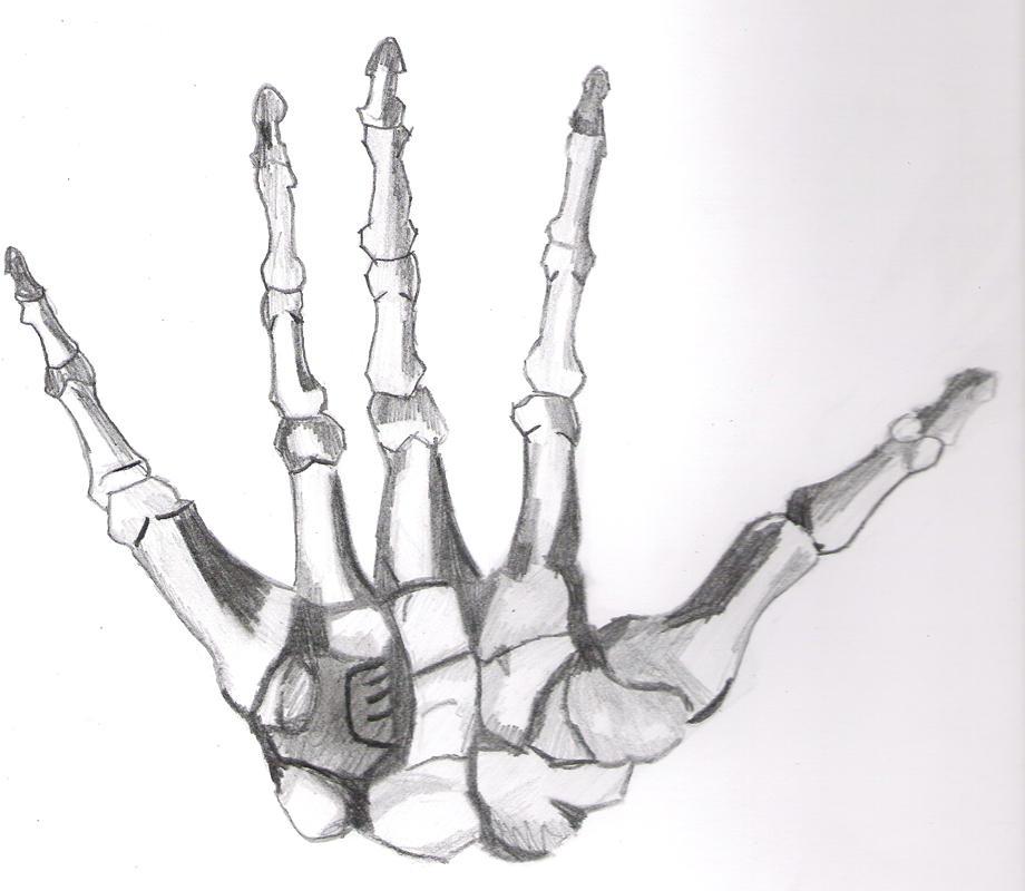 Anatomy Skeleton Hand By Pinje On Deviantart
