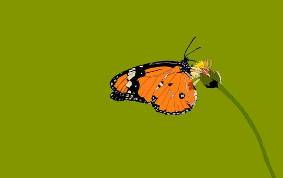 The Orange Nectar Sucker