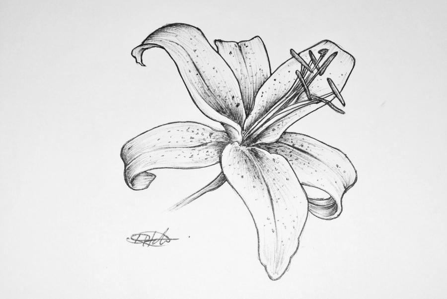A Lilly Design For Close Friend Of Mine By
