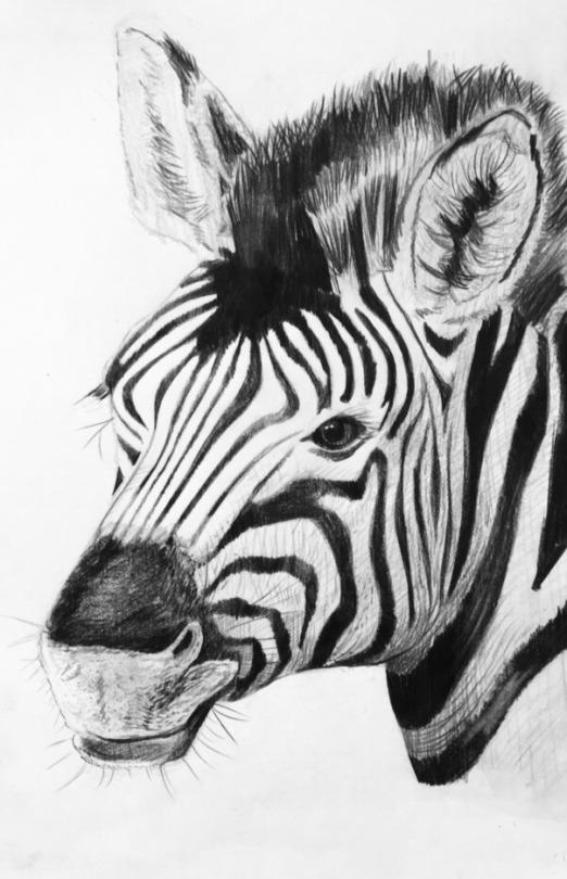 Zebra Process Practice by Bunlief