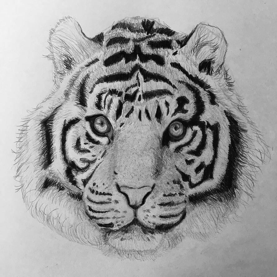 Tiger Study by Bunlief