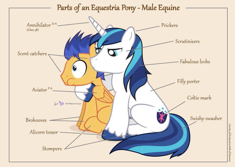 Parts of an Equestria Pony - Male Equine
