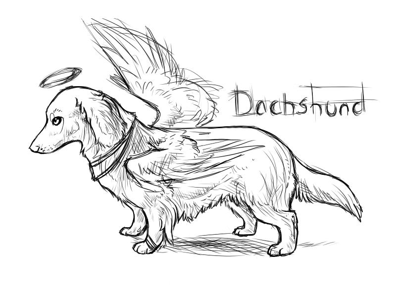 Line Drawing Dachshund : Line drawing dachshund f a c fc b be g rosie dog