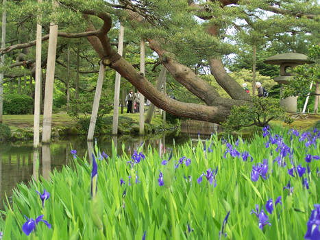 Iris and Pine
