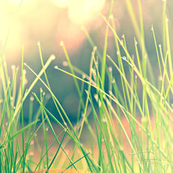 _Sweet_Mornin_ by fal-name