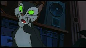 Confused Cat -Felidae s. cap
