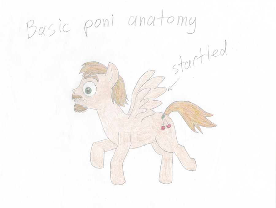 Basic poni anatomy: for noobs out there. by KlarkKentThe3rd