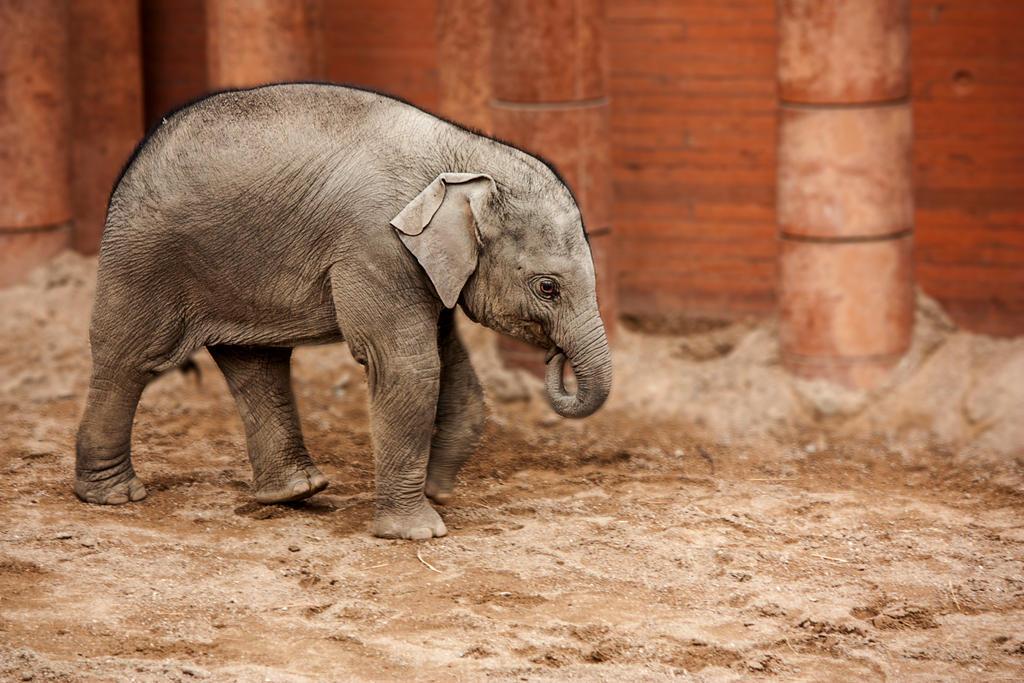 Asian elephants art