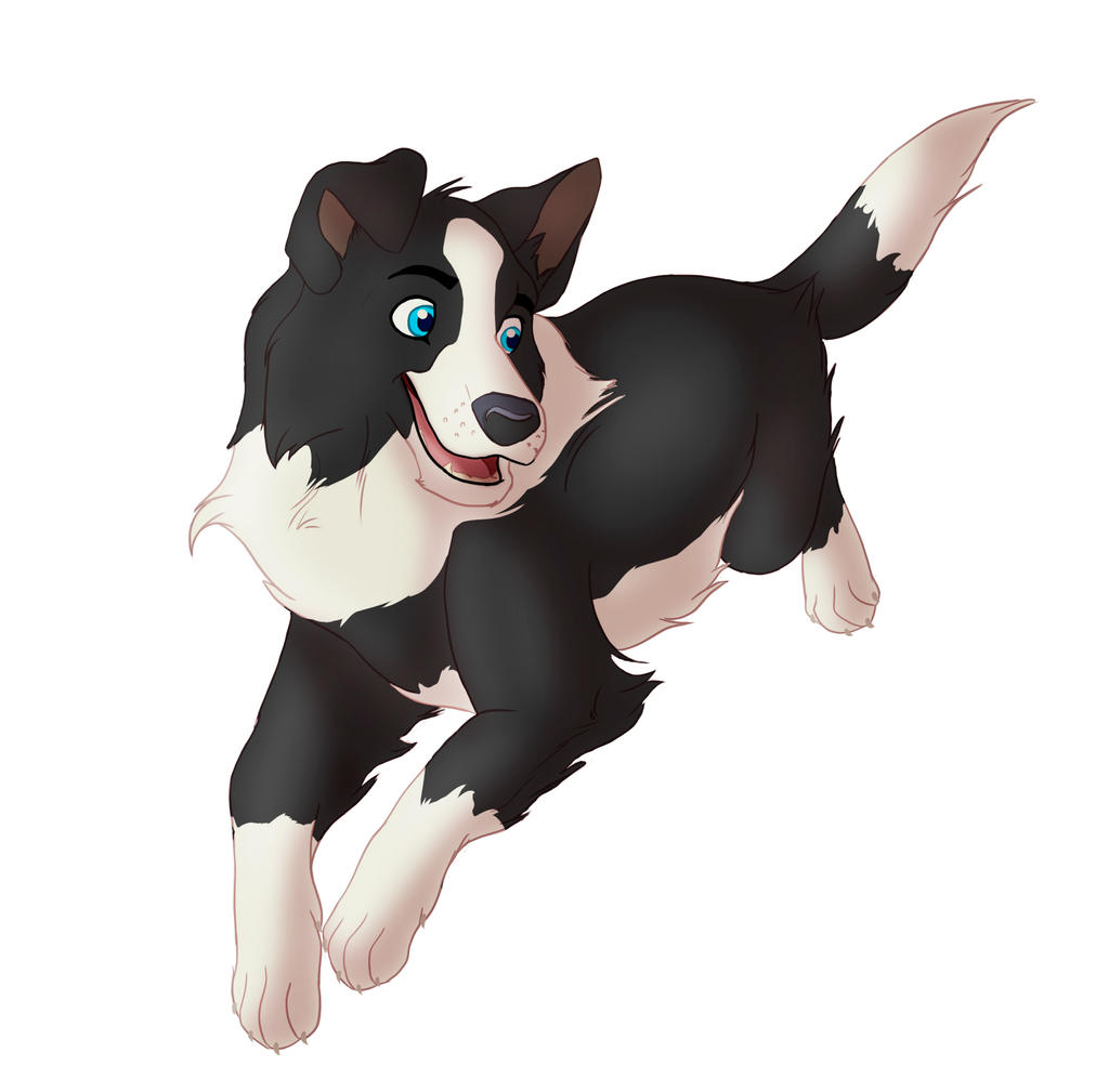 border collie by takadk border collie by takadk