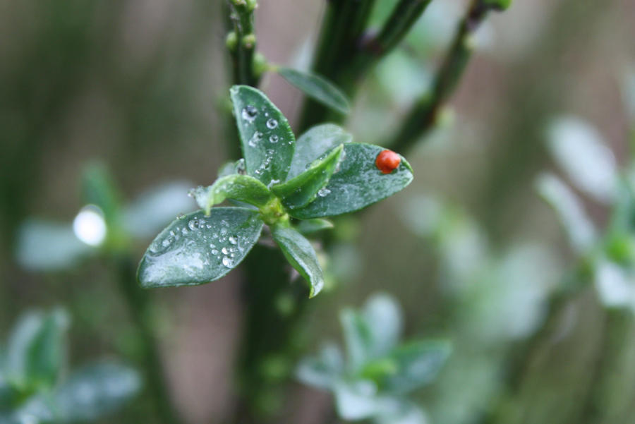 Blood Drop on Leaf by BlueDragonRose