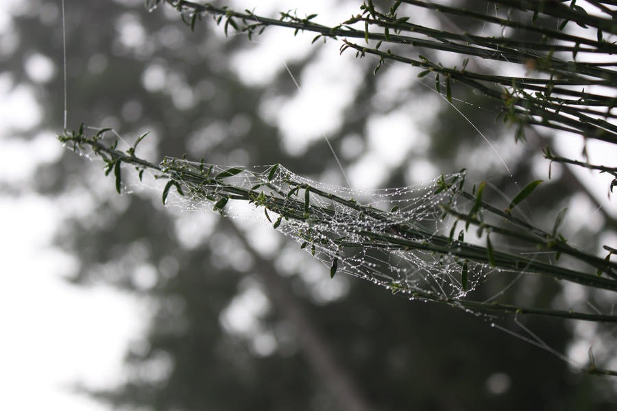 Spiders do in Morning Dew 2 by BlueDragonRose