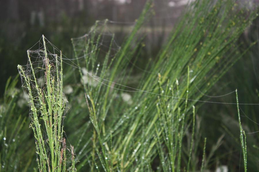 Spider Webbing by BlueDragonRose