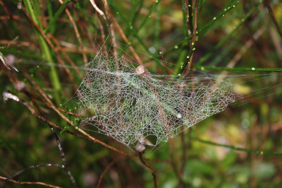 Spider Web Lace by BlueDragonRose