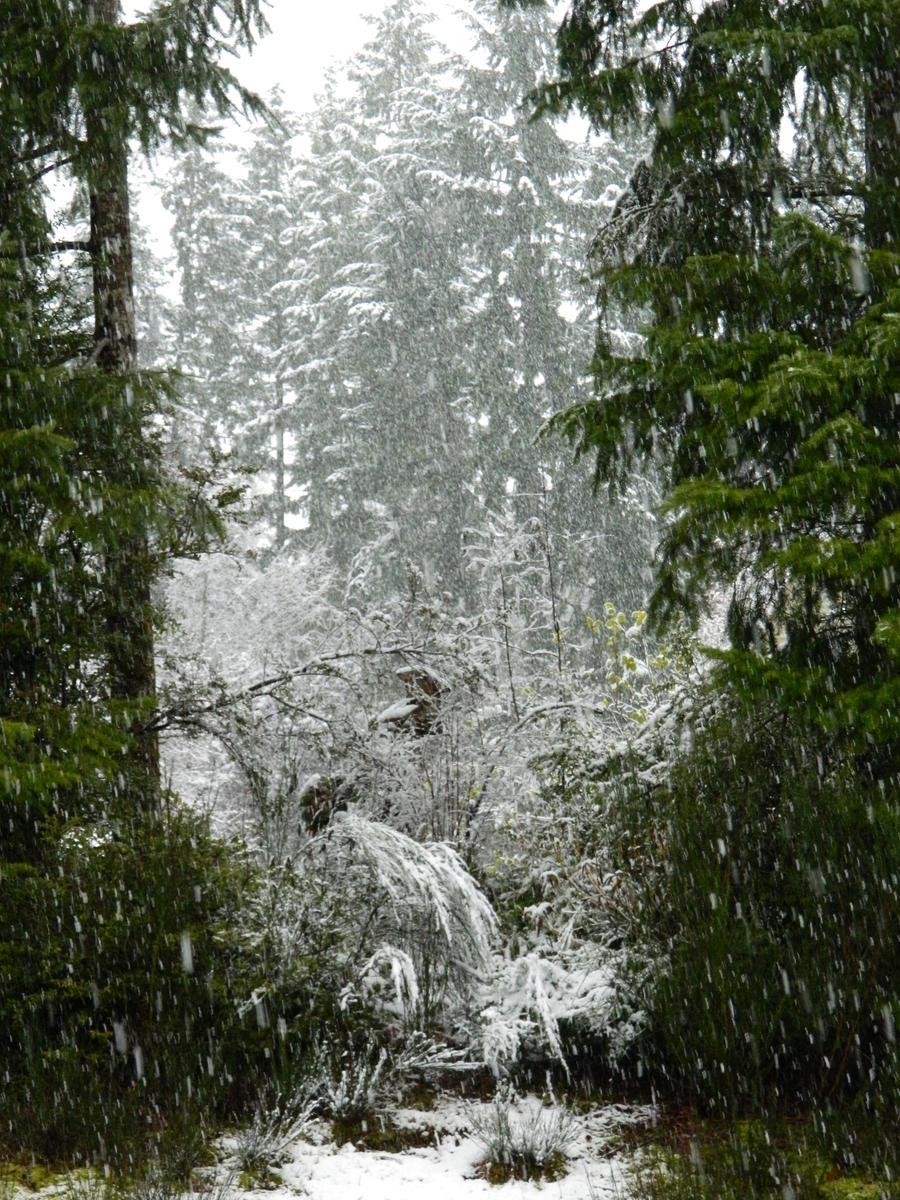 A Winter's Dream by BlueDragonRose