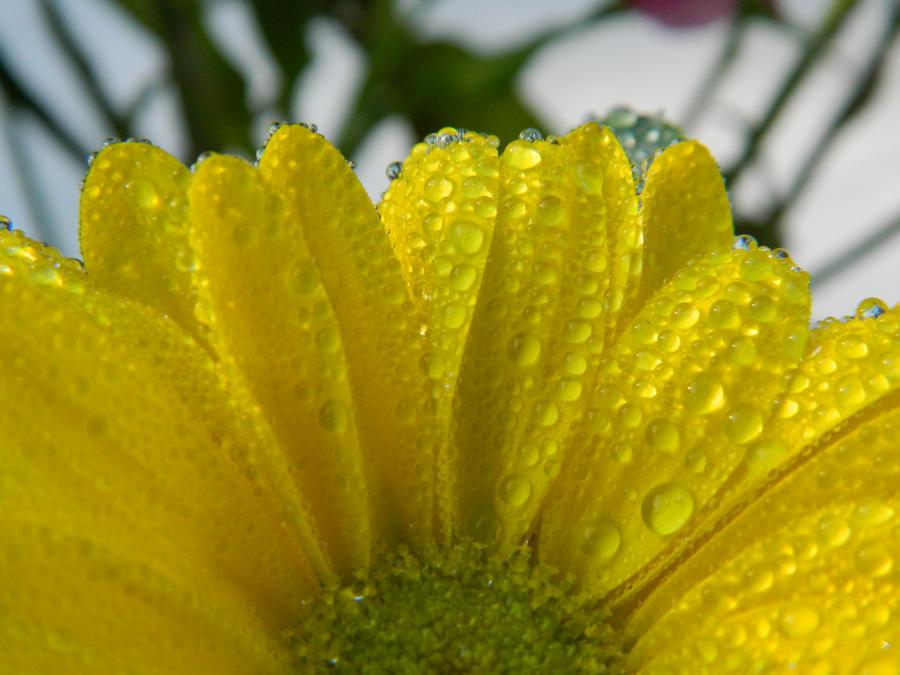 A Fan Of Yellow by BlueDragonRose