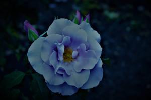 Blue For U