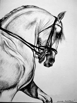 Drawing Horse I.
