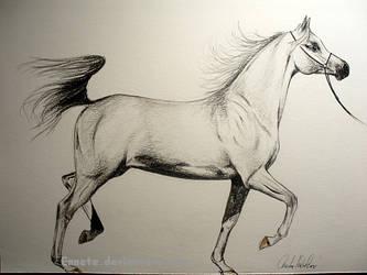 Arabien horse by Ennete