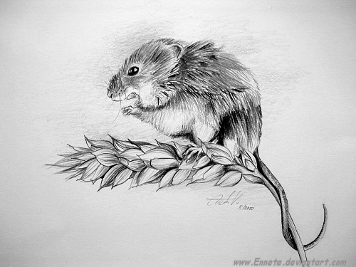 Mouse by Ennete