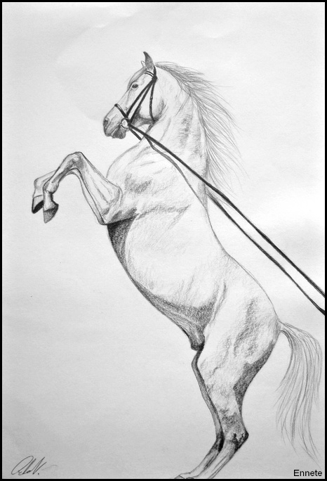 drawing bucking white horse by ennete