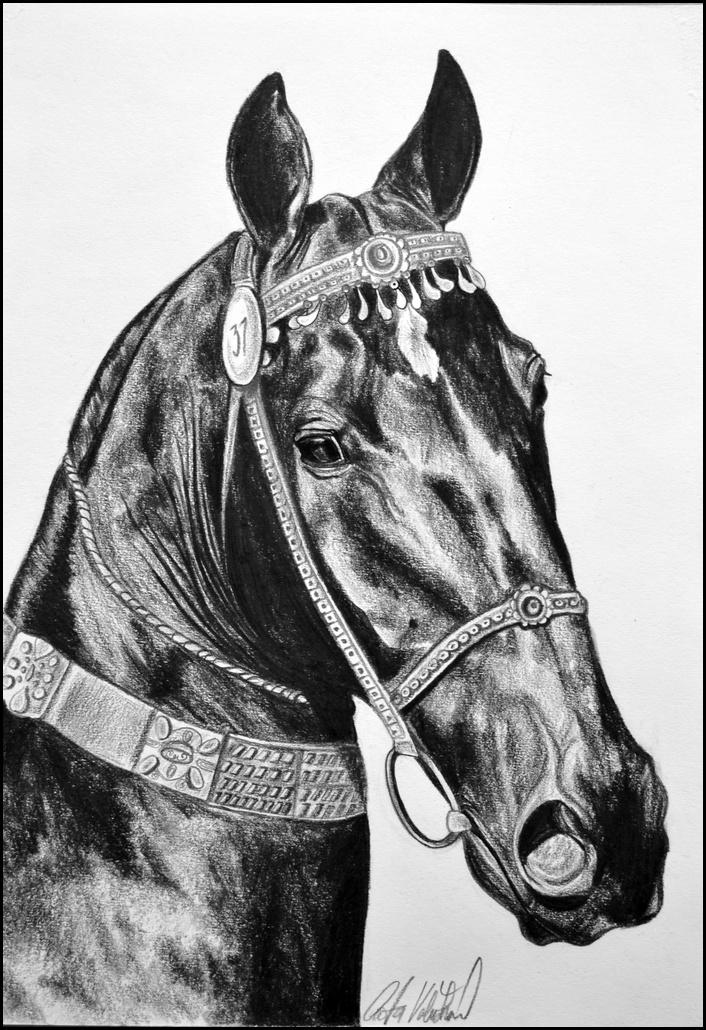 Drawing- Achalteke horse by Ennete
