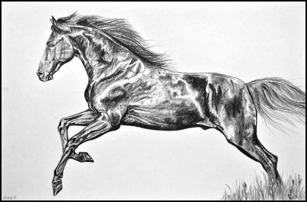 Drawing- Galloping horse by Ennete