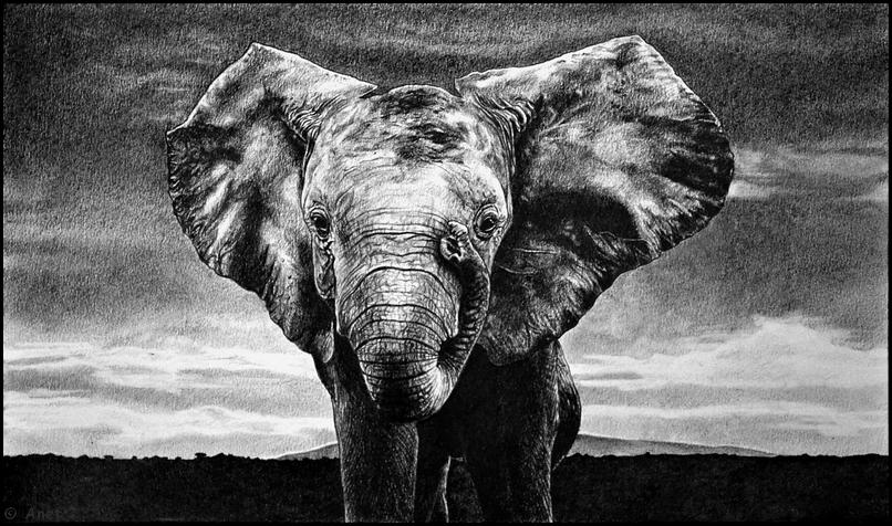 Elephant II. by Ennete