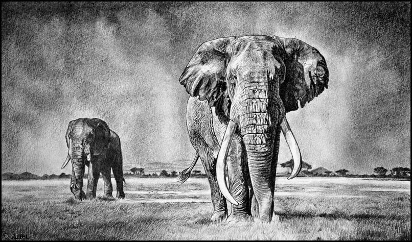 Elephant III. by Ennete