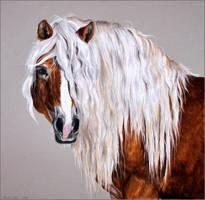 Drawing-Haflinger horse by Ennete
