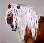 Drawing-Haflinger horse