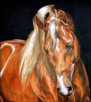 Drawing- Arabian horse by Ennete