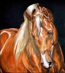 Drawing- Arabian horse