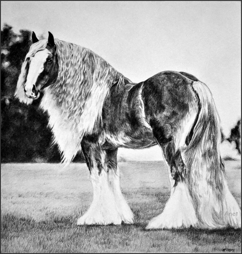 Drawing- Draft horse by Ennete