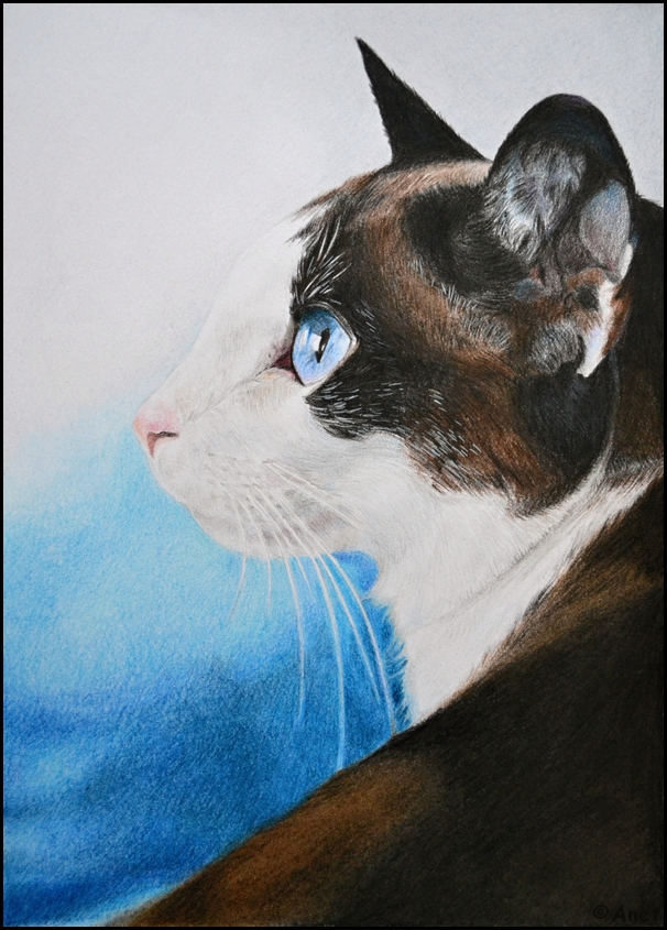 Drawing- Cat by Ennete