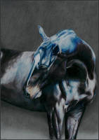 Drawing horse by Ennete