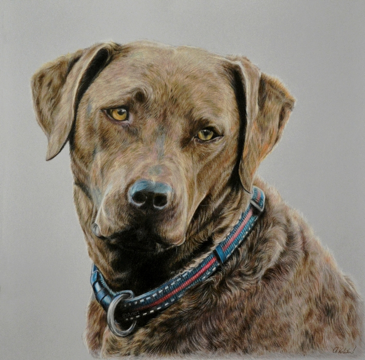 Drawing - dog lady Alba II. by Ennete