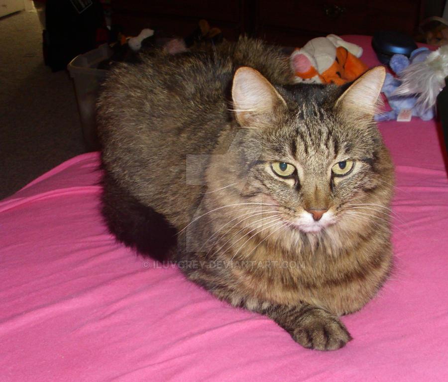 My kitty cat :P by iluvgrey