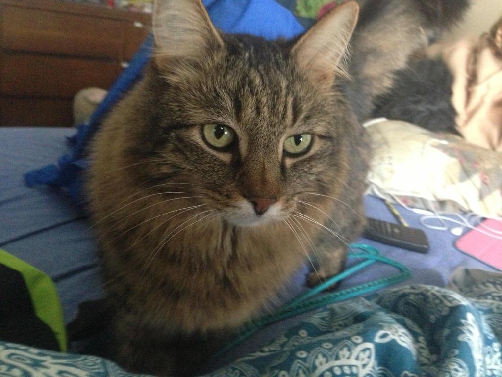my kitty cat!! by iluvgrey