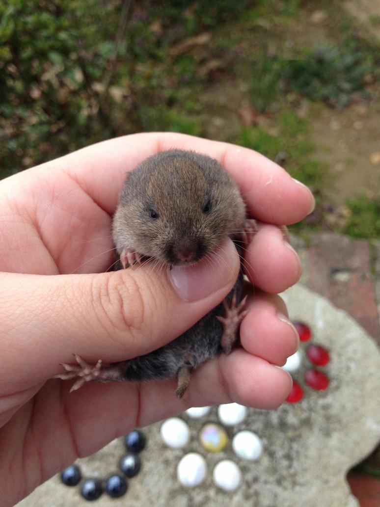 its a mole!! by iluvgrey