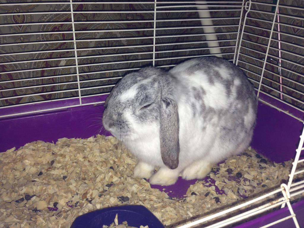my friend's bunny! by iluvgrey