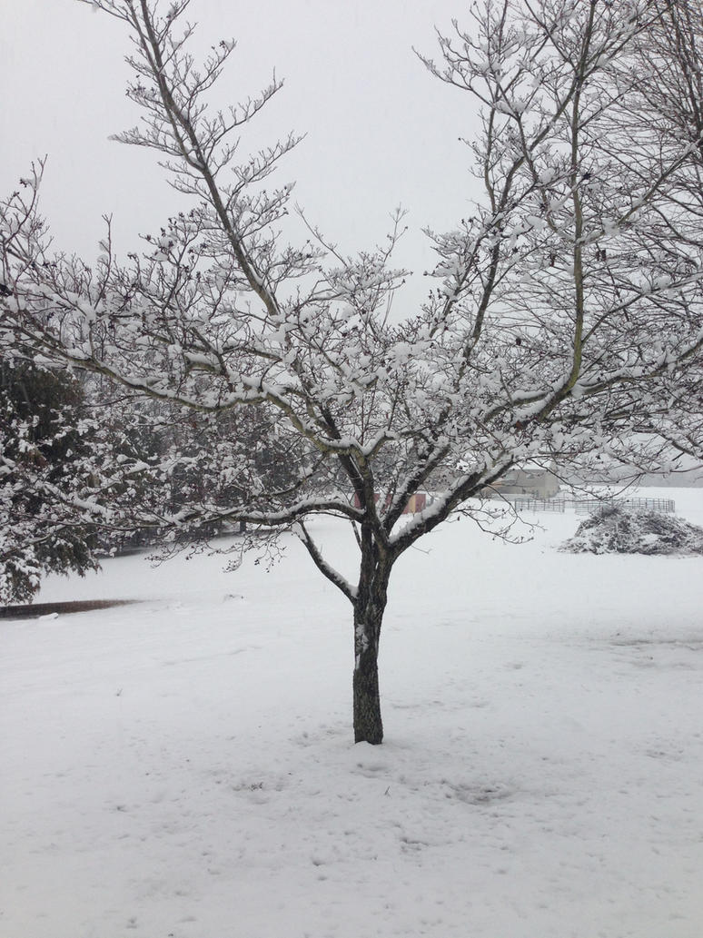 let it snow! by iluvgrey