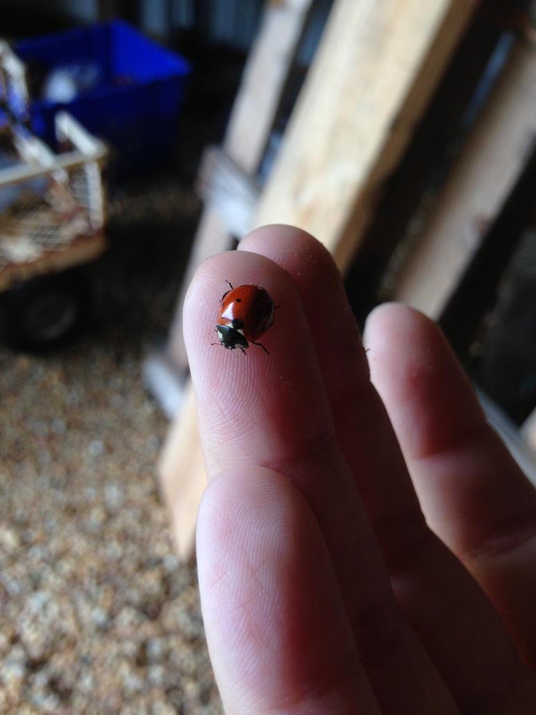 little miss ladybug by iluvgrey
