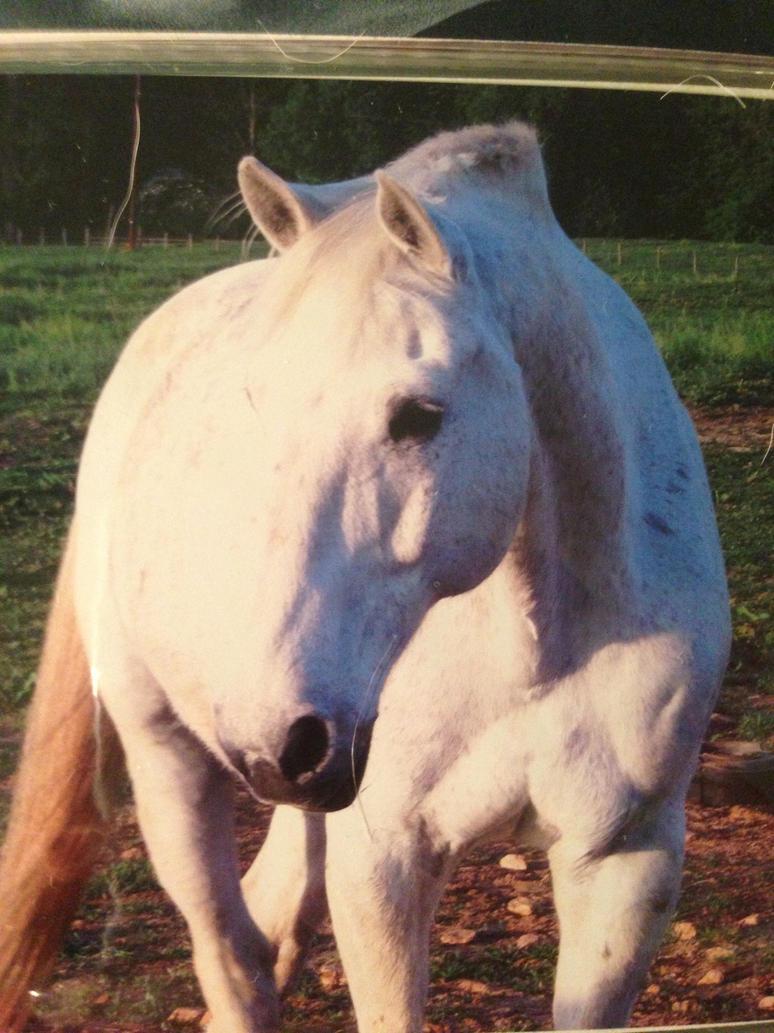 white horse by iluvgrey