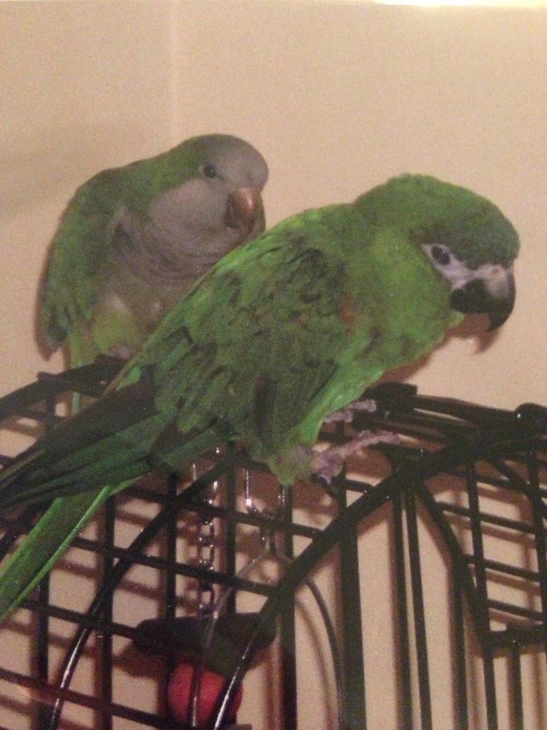 green birdies! by iluvgrey