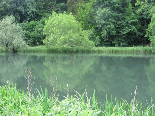 Pond by melemel