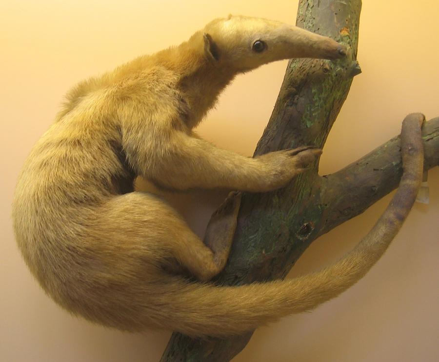 Not An Anteater by melemel