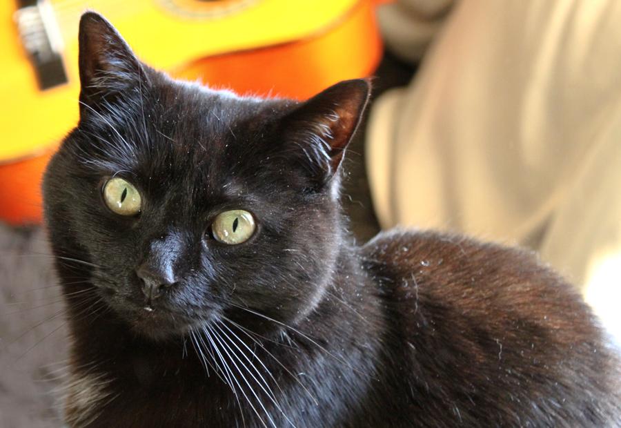Black Dusty Cat by melemel