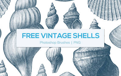 Vintage Shells Photoshop Brushes
