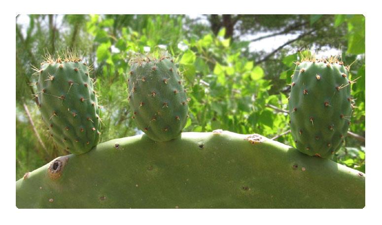 Cacti by melemel